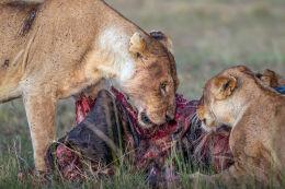 Sharing the kill