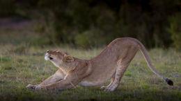 Female stretch