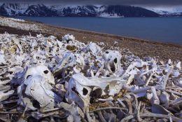 Arctic Graveyard