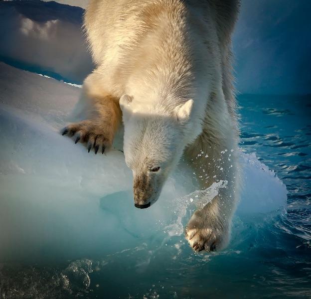 Arctic Dip
