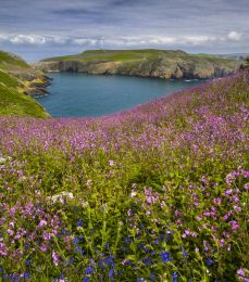 Skomer Island,Pembrokeshire