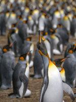 2018 Falkland Islands Adventure