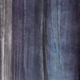Conifers 1