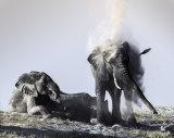 Elephants 2, Okavango