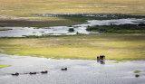 Elephants 5, Amboseli