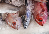 Fishmonger's slab, Cochin