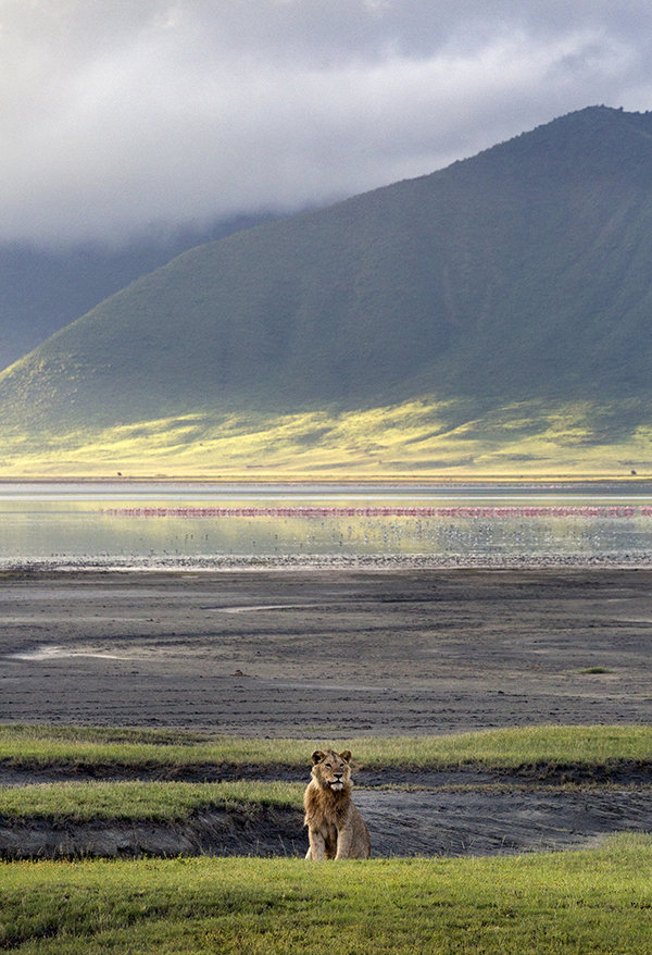 Lions and flamingoes 2, Ngorongoro Crater, Tanzania