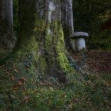 Lukesland in autumn 7