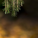 Lukesland in autumn 9