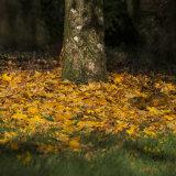 Lukesland in autumn 1