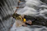 Lukesland in autumn 4