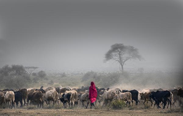Masai herdsman, Ambosele