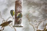 Snow birds 1
