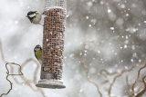 Snow birds 2