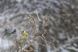 Snow birds 5