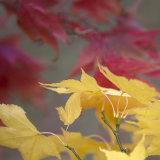 Westernbirt Arboretum, Autumn 2