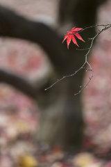 Westernbirt Arboretum, autumn 4