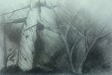 Study of tree and undergrowth