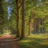 Donadea Woodland scene