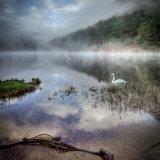 Lone Swan Glendalough
