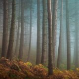 Trees in the mist 1
