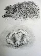 Hedgehog by Liz Clark - Oil Pastel