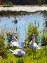 Nesting Geese by Brian Alderman - Oil
