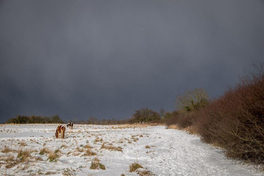 Horsefield Winter