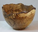 #260 burr oak