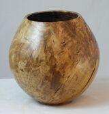 #261 burr oak