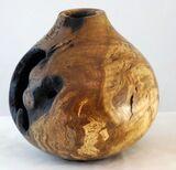 #286 burr oak