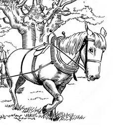 Horse & timber