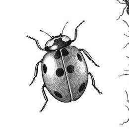 Bugs & grubs