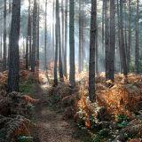 Bourne Woods