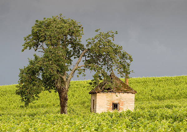 Vine Worker's Hut