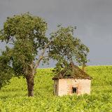 Vine Worker's Hut