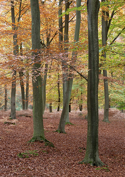 Alice Holt Forest