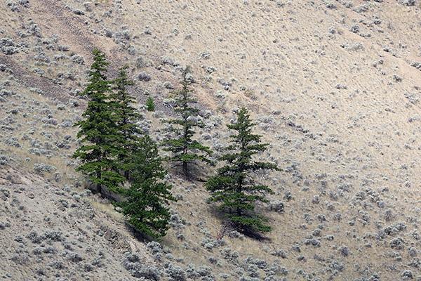 Minimalist Trees