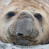0721-Elephant Seal 2