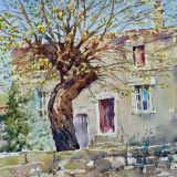 Provence tree