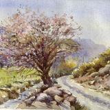 Thorn blossom