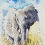 Okavangon elephant