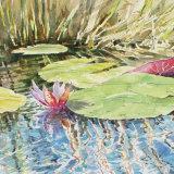 Waterlilies of the Okavanga