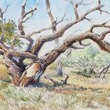 Twisted tree Kwara camp Botswana