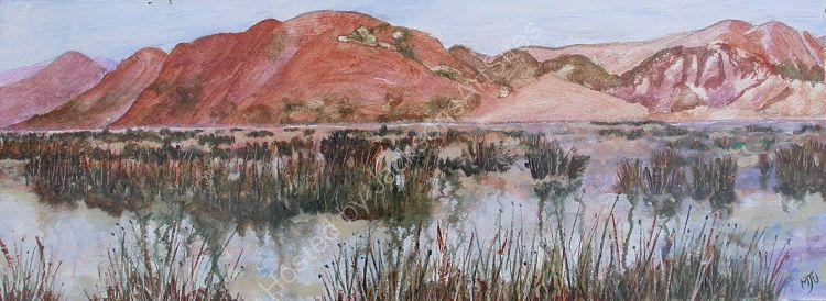 Reed Bed Lake Ticikarka Peru
