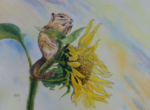 Chipmunk on a Sunflower