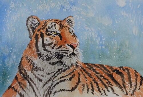 Relaxed Tiger