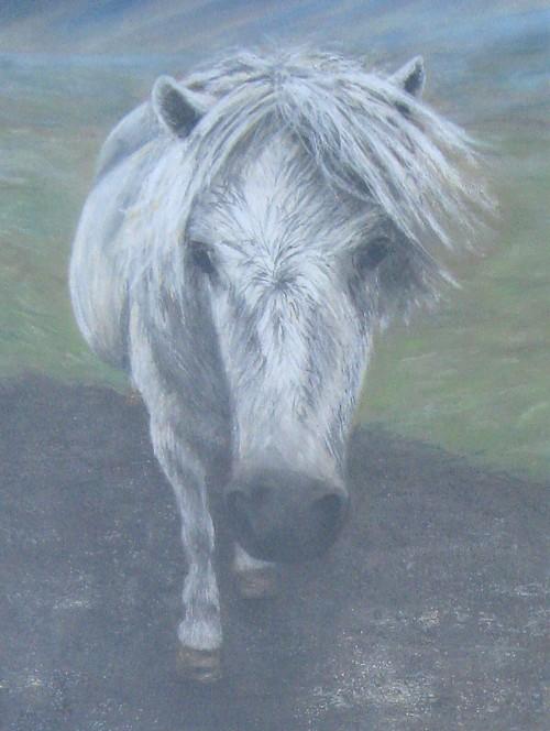 Wild Hill Pony