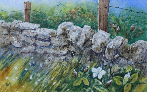 Old wall with White Campion