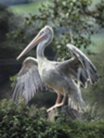 R2 I5 Pelican